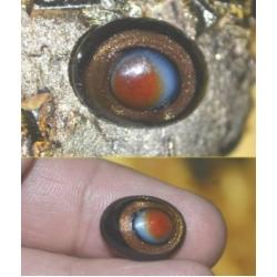 Dewa Eye Gold Sand Stone Khodamic Wealth Love Evil Eye Protection Talisman (order now)